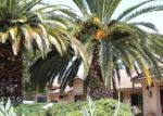 Foreclosed Home in Escondido 92026 944 NORTH AVE - Property ID: 70129188